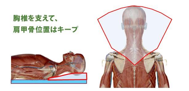 胸椎を支えて肩甲骨位置はキープ